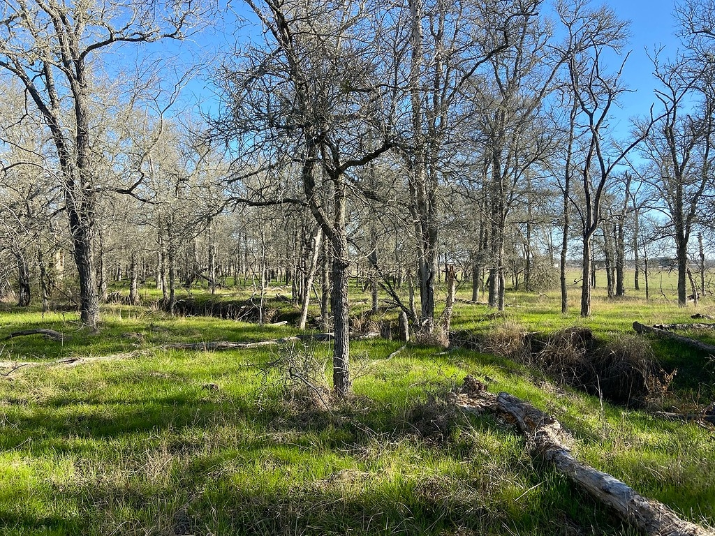 16 acres for sale on Kirkham Road in Winchester Texas
